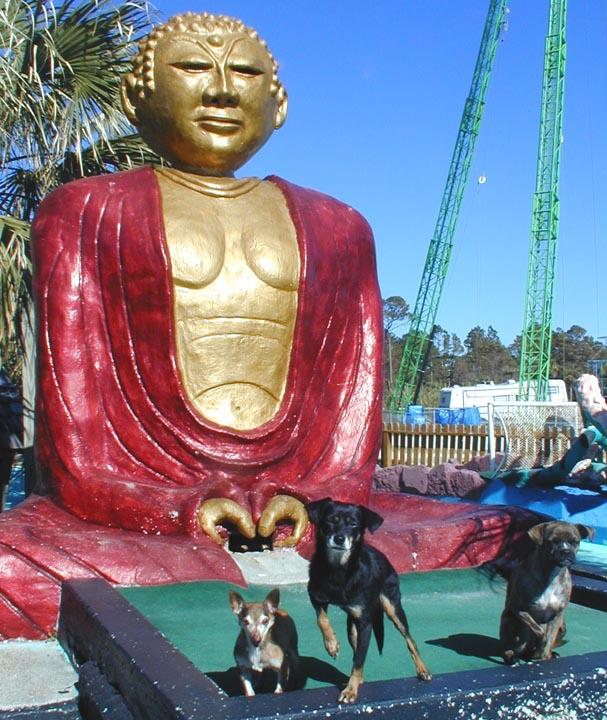 Debra Jane's Great Dogs | RoadsideArchitecture.com
