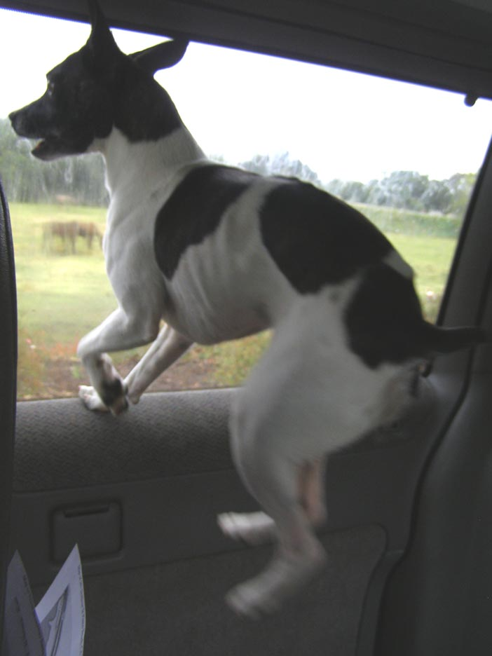 San Luis Dog Rescue