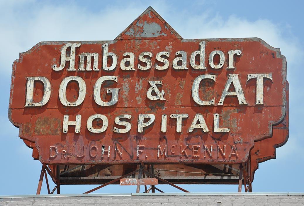 Ambassador Dog And Cat Hospital Los Angeles